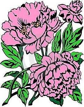 Peony Royalty Free Stock Image - Image: 19725776