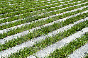 Grass Stripes, Raw Stock Image - Image: 19728721