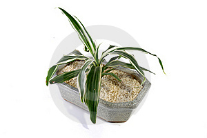 Zen Plant In A Granite Vessel Royalty Free Stock Photography - Image: 19734397