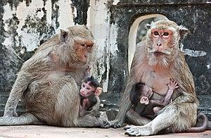 Family Of Monkeys Royalty Free Stock Photo - Image: 19734485
