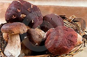 Basket Full Of Mushrooms Stock Image - Image: 19734761