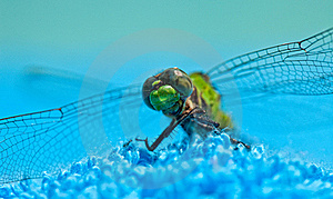 Close-Up Of Green Dragonfly Stock Photography - Image: 19735052