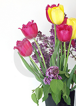 Syringa And Tulips Bouquet Royalty Free Stock Images - Image: 19735929