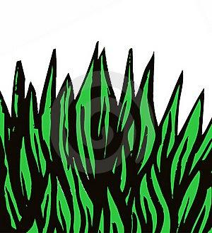 Green Grass Stock Image - Image: 19738831