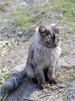Grey Cat Royalty Free Stock Photos - Image: 19738998