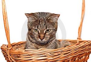 Cat In Basket Royalty Free Stock Image - Image: 19739516