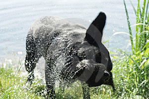 Dog Shaking Off Water Royalty Free Stock Photography - Image: 19749177