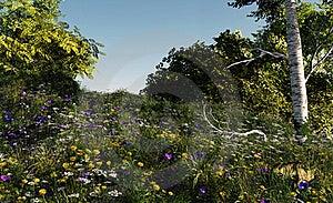 λόφος λουλουδιών Στοκ φωτογραφία με δικαίωμα ελεύθερης χρήσης - εικόνα: 19750925