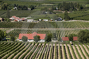 Orchards And Vineyards Stock Photo - Image: 19770020