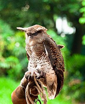 Horned Eagle Owl Stock Image - Image: 19773841