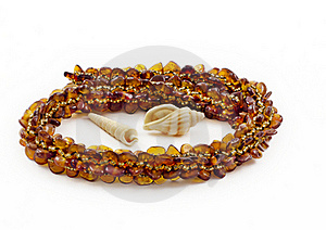 Necklace Of Baltic Amber And Shellfish Royalty Free Stock Images - Image: 19780539