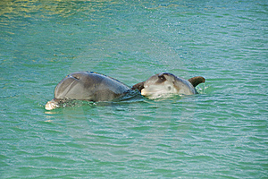 Mother And Baby Dolphin Stock Image - Image: 19792321