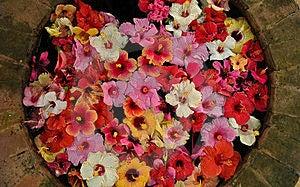 Wishing Well Royalty Free Stock Photo - Image: 19792485