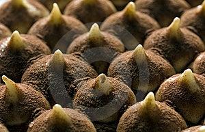 Tiramisu Cake Royalty Free Stock Images - Image: 19794819