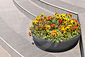 Steps And Flowers. Royalty Free Stock Photo - Image: 19797065