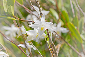 White Orchid. Stock Photos - Image: 19801613
