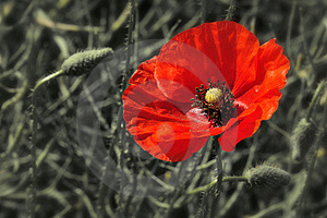 Red Weed Royalty Free Stock Photos - Image: 19802828