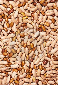 Beans Background Stock Image - Image: 19815471