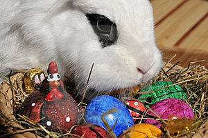 Feature Photo Easter Stock Images - Image: 19829264