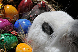 Feature Photo Easter Royalty Free Stock Photography - Image: 19829267