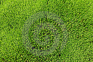 Grass Field Royalty Free Stock Image - Image: 19832646
