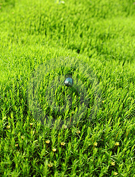 Green Beetle On The Field Stock Photos - Image: 19832683