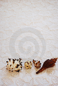 Sea Shells Stock Photography - Image: 19837612
