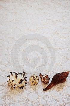 Sea Shells Stock Photography - Image: 19837612