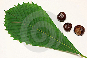 Horse-chestnuts And Leaf Of Horse-chestnut Stock Photography - Image: 19839122