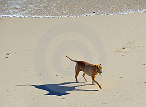 Dog At Beach Royalty Free Stock Photography - Image: 19843487