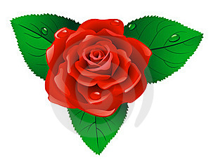 Red Rose. Royalty Free Stock Photography - Image: 19843557