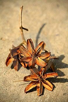 Dry Flower Stock Image - Image: 19843791