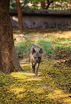 Hyena Royalty Free Stock Images - Image: 19843939