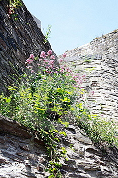 Flowers On A Castle Wall Stock Photos - Image: 19844623