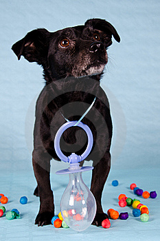 Black Terrier Stock Photography - Image: 19849382