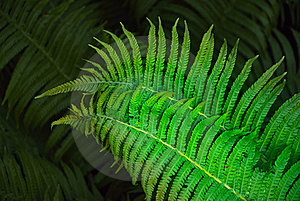 Fern Stock Photography - Image: 19849812