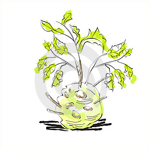 Fresh Celery With Root Leaf Stock Photography - Image: 19855262
