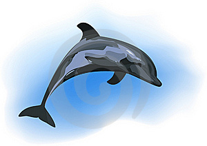 Dolphin Stock Images - Image: 19869184