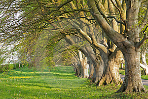 Line Of Trees Royalty Free Stock Photography - Image: 19872417