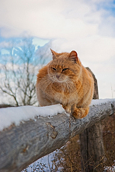 Red Cat Royalty Free Stock Photos - Image: 19880068
