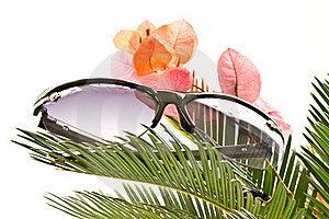 Sunglasses Stock Photo - Image: 19880070