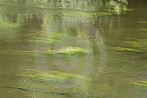 Green Algae In The Stream Of Water Royalty Free Stock Images - Image: 19882669