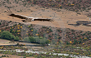 Vultures Royalty Free Stock Photo - Image: 19890765