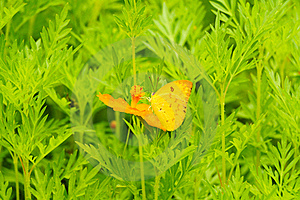 Butterfly On Yellow Flower Royalty Free Stock Images - Image: 19892089