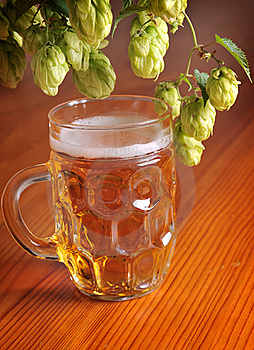 Beer And Hops Stock Images - Image: 19892274