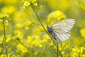 Insect Butterfly Wings Royalty Free Stock Photo - Image: 19899315