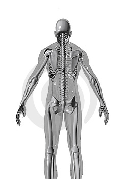 Anatomy2_R Royalty Free Stock Photo