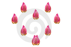 Group Of Lotus In A Heart Shape Royalty Free Stock Photo - Image: 19900655