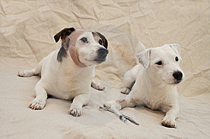 Canine Health Care Royalty Free Stock Image - Image: 19903746