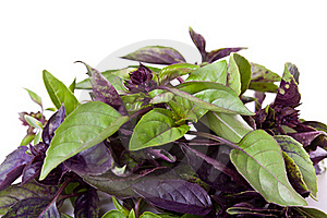 Mix Of Green And Purple Basil Stock Photos - Image: 19904723